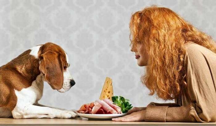 11 ushqime njerëzish që janë të pranueshme për qentë