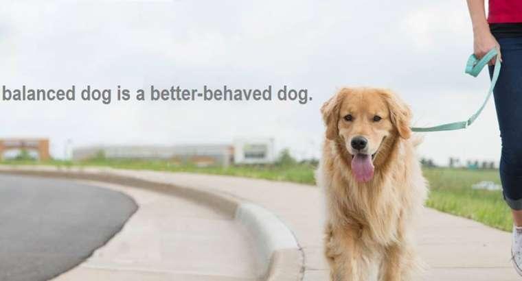7 këshillat për të krijuar rolin e drejtuesit ndaj qenit tënd
