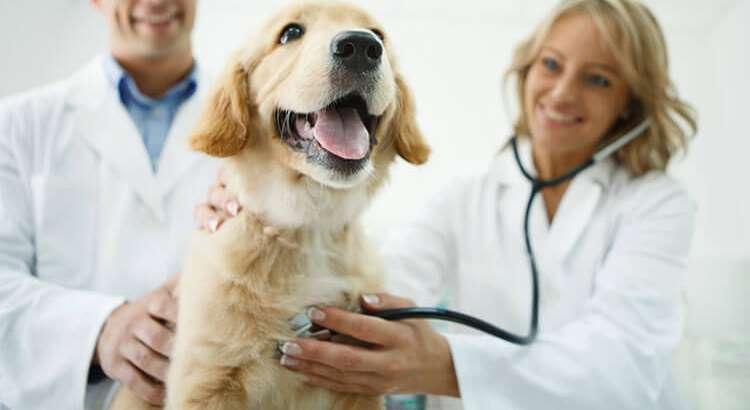 Kur duhet bere sterilizimi ose kastrimi i qenit?