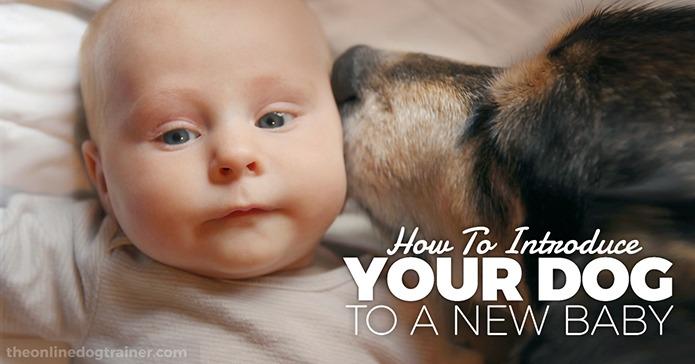Qeni dhe foshnja – Si t'i prezantojmë