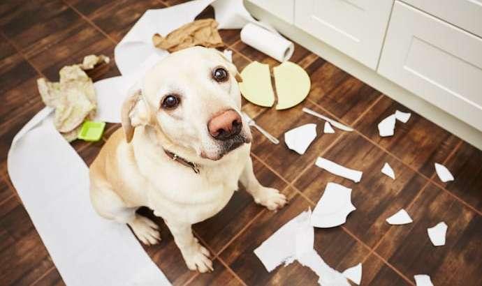 Pse qentë ngacmojnë sendet – dhe si ta ndalojmë atë