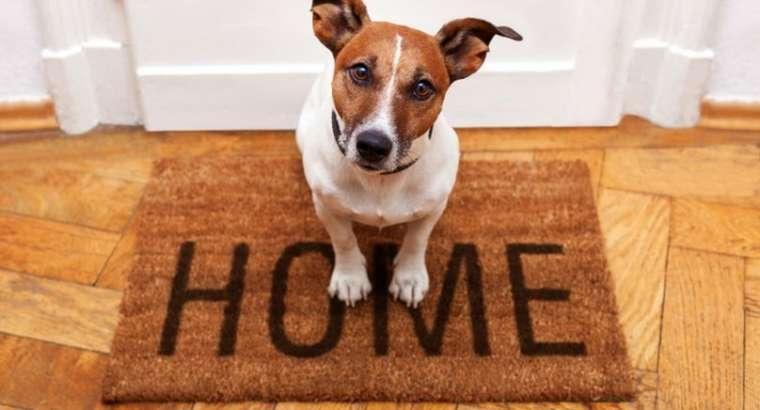 Si te prezatojme qenin me shtepine per here te pare