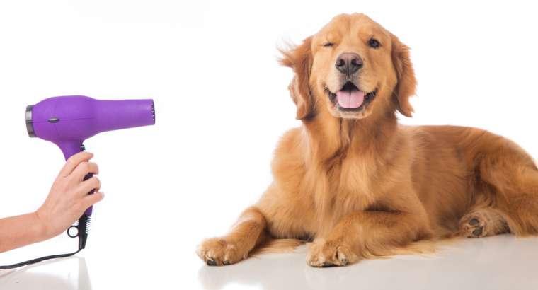 Qimja e qenit tregon shume per shendetin e tij