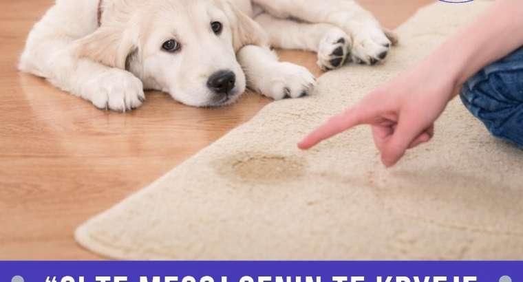 Si te mesoj qenin te kryej nevojat jashte shtepie?