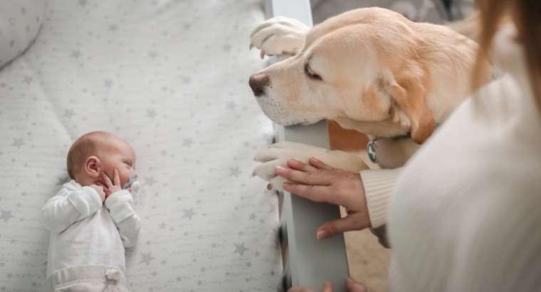 Qeni dhe foshnja e sapolindur