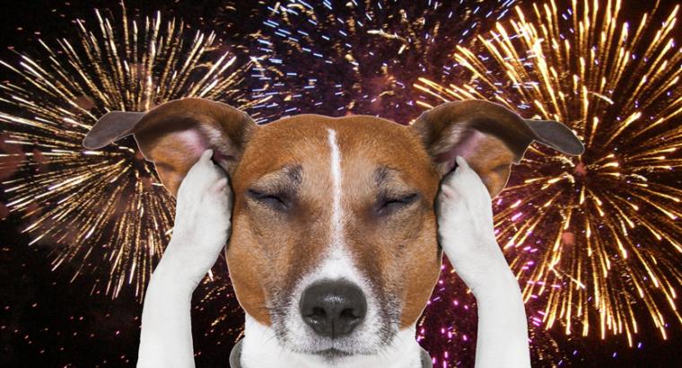 Frika e qenve nga fishekzjarret. Si ta menaxhojme ate?